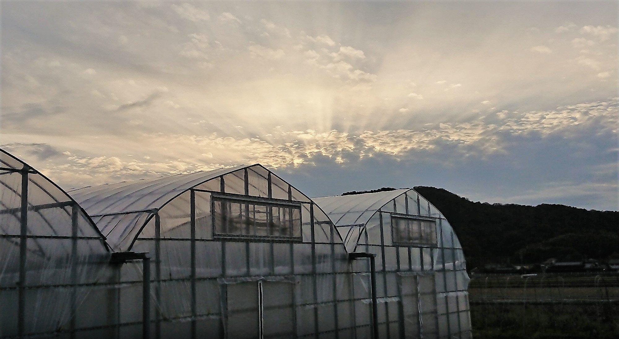 たちばな農園